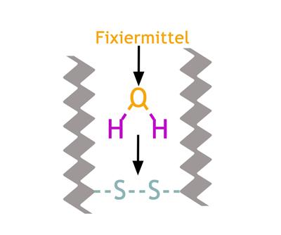 Sauerstoff entzieht dem Haar den Wasserstoff - so können sich die Doppelschwefelbrücken wieder schließen