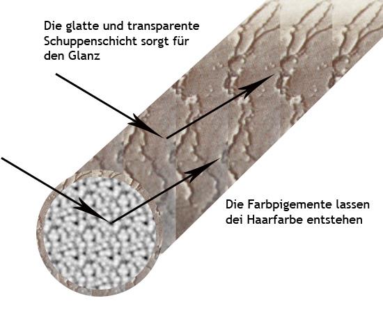 Die Schuppenschicht sorgt für den Glanz, die Pigmente im Haarinneren für die Farbe